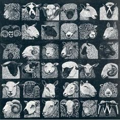 Hilary Paynter : Sheep Show at Davidson Galleries Davidson Galleries, Sheep Art, Sheep And Lamb, Scratchboard, Wood Engraving, Gravure, Woodblock Print, Farm Animals, Pet Birds