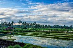 Hoe mooi wil je het hebben... 'A morning at Tetebatu, Lombok (Indonesia)' van Christian Tuk - voor aan de muur!