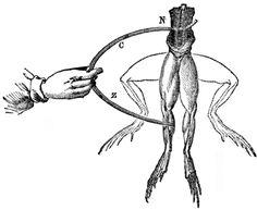 Galvani-frogs-legs-electricity.jpg (730×598)