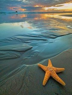 Star on the beach. Find your paradise on http://www.exquisitecoasts.com/
