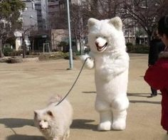 Dog walking a dog.