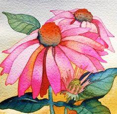 PinkConeflower.....pencil and watercolor