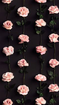 55 Ideas For Flowers Photography Wallpaper Rose Pale Pink - Wallpaper Quotes Rose Gold Wallpaper, Flower Phone Wallpaper, Iphone Background Wallpaper, Trendy Wallpaper, Tumblr Wallpaper, Aesthetic Iphone Wallpaper, Wallpaper Iphone Vintage, Flowers Background Iphone, Background Patterns
