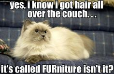 FURniture. Love it! I'm quite certain that my cats  (if they could speak )would be telling me that - cats +furniture = lint rollers and Febreeze