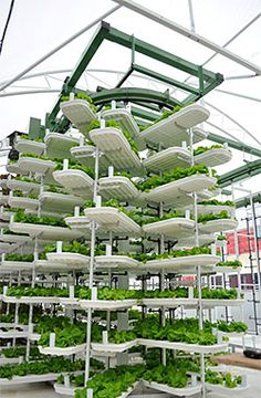 Instead of having a garden be grown horizontally, we can have plants be grown vertically. This will save lots of space which is beneficial for a place like Riverdale Farm where there isn't enough space to grow a lot of crops. This vertical garden can provide a source of income for the farm.