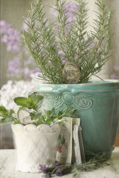 indoor herbs . . . in lovely pots add to elegance and beauty.  In the summer, they can go outside.