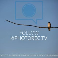 You should follow @photorec.tv - it's a great way to stay on top of the content we are producing be notified of the fun weekly challenges and gain followers by participating and getting reposted/regrammed.  Moving forward the weekly challenges will only be posted @photorec.tv  #PRTV #weeklychallenges #learnmore #camerareview #Inspiration #repost