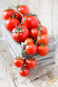 Grow Organic Tomatoes When Should You Sow Tomato Seeds?