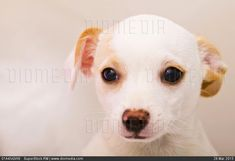 Close-up of a puppy - stock photo