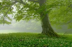 Where the morning mist rises up from the soft green beneath our feet