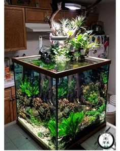 Iwagumi tank is one of the most simple and elegant looking aquascape aquarium setup, it looks easy to accomplish but is not. This aquascaping beginner guide will teach you how to do it. Planted Aquarium, Aquarium Aquascape, Aquarium Garden, Aquarium Landscape, Betta Aquarium, Aquascaping, Home Aquarium, Nature Aquarium, Fish Aquarium Decorations