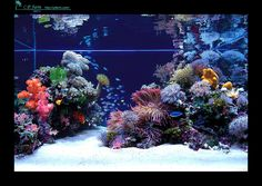 Saltwater Aquarium Decorations For Your Marine Tank Now for the enjoyable part-- saltwater fish tank designs are one element of marine fish keeping where you Saltwater Aquarium Beginner, Saltwater Aquarium Fish, Saltwater Tank, Freshwater Aquarium, Aquarium Design, Home Aquarium, Wall Aquarium, Coral Reef Aquarium, Marine Fish Tanks