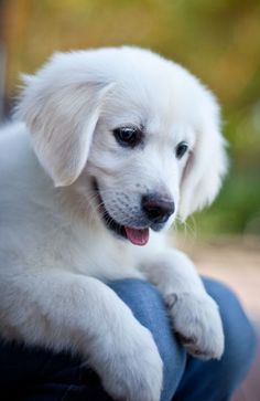 I Love all Dog Breeds: 5 Dog Breeds to fight Depression and Anxiety