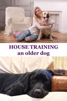 Have you recently adopted an adult Labrador, who has never been potty trained before? We will show the trick to successfully potty training an older dog.