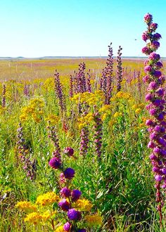 Wildflowers, Flint Hills   Photo Credit: GregKramosUSFWS