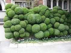 juniper balls | Flickr - Photo Sharing!