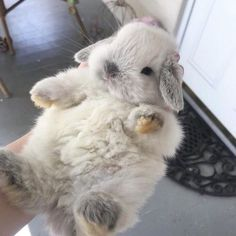 Animals, cute animals и cute baby animals. Cute Little Animals, Cute Funny Animals, Cute Dogs, Cute Baby Bunnies, Bunny Bunny, Bunny Rabbits, Tier Fotos, Cute Creatures, Animals Beautiful