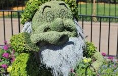 Sneezy topiary, germany, 2014 epcot international flower and garden festival, epcot, walt disney world