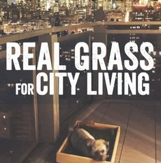 Real Grass for City
