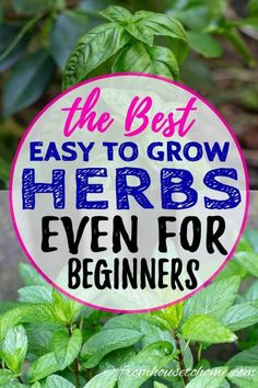 Great list of easy to grow herbs! I love all the gardening tips for planting them in your garden and the recipe suggestions that use the herbs like parsley, oregano, mint and rosemary. #fromhousetohome #gardeningtips #gardenideas #herbs  #vegetablegardening