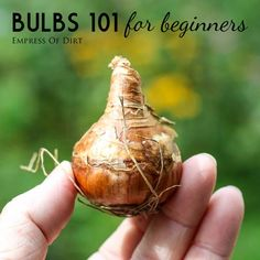 Bulbs 101 for beginners | Easy start for planting beautiful spring-flowering bulbs | It's time! | empress of dirt on #eBay