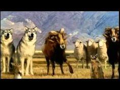 """""""Lamb Streaker"""" Ads for Budweiser (Anheuser-Busch Companies, Inc.)"""