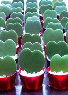 Hoya Kerrii Valentines Hearts, how cute Weird Plants, Unusual Plants, Rare Plants, Cacti And Succulents, Planting Succulents, Planting Flowers, Hoya Plants, Cactus Plants, Pot Plante