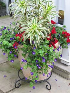 For gorgeous containers, use the Thriller/Spiller/Filler method. Choose a taller plant as your thriller, a filler to add around the base and a trailing plant to spill or cascade down the sides. More container garden tips @ http://themicrogardener.com/6-easy-diy-container-garden-projects/ | The Micro Gardener