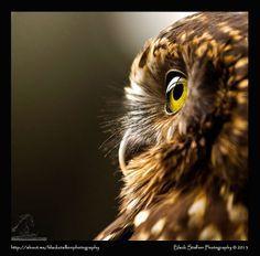 Owl Who, Owl Always Love You, Cute Animal Pictures, Owls, Cute Animals, Bird, Naturaleza, Taurus, Pretty Animals