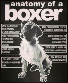 """Figure out more information on """"Boxer Puppies"""". Have a look at our internet site. Boxer Mom, Boxer And Baby, I Love Dogs, Puppy Love, Boxer Dog Quotes, Boxer Dogs Facts, Boxer Breed, Akita Dog, Cat Dog"""