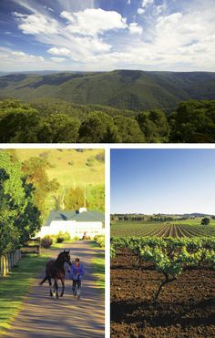 Hometown, Scone, Hunter Valley, NSW  Horse Capital Of Australia - no place like home <3