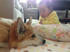 The Interaction Between This Baby And Corgi Is The Best Thing You'll See All Day. Heart Melted.