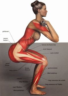 All of the muscles involved in a front squat