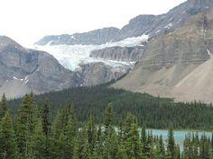 Bosque y glaciar