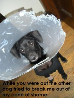Dog Shaming features the most hilarious, most shameful, and never-before-seen doggie misdeeds. Join us by sharing in the shaming and laughing as Dog Shaming reminds us that unconditional love goes both ways. Funny Animal Pictures, Dog Pictures, Funny Animals, Cute Animals, Animal Memes, Animal Funnies, Animal Pics, I Love Dogs, Puppy Love