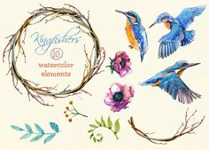 Kingfishers Watercolor Clip Arts -10 by Drumla on @creativemarket