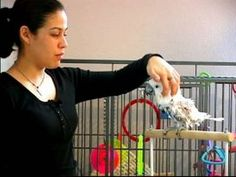How to Train a Parrot : How to Pet Parrots