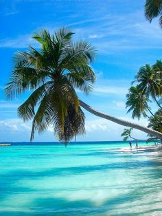 Unrivaled Beauty ~ Paradise island in the Maldives #beach #sea