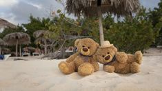 Teddy Hermann, Cute Bears, Place Cards, Teddy Bear, Place Card Holders, Cool Stuff, Toys, Wallpaper, Sweet