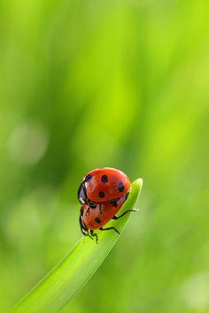 Ladybird Loving