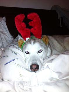 Best looking reindeer!