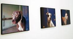 Charlotte Dumas @ Volkskrant Beeldende Kunst Prijs, foto: Fenna van den Berg