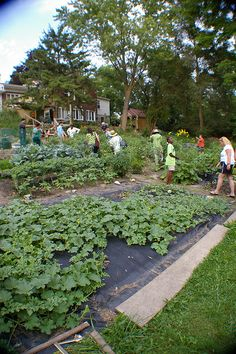Brightmoor Community Garden