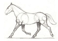 Drawing lesson for Beginner artists: The proportions of a horse ...