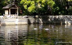 Habitantes del lago | Flickr: Intercambio de fotos