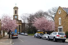 st peters square hammersmith cherry trees - Google Search