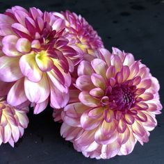 Farmer, Bloom, Seasons, Lady, Rose, Plants, Dahlias, Gardens, Flowers