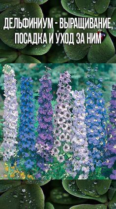 Small Farm, Invitations, Green, Flowers, Plants, Color, Gardens, Colour, Save The Date Invitations