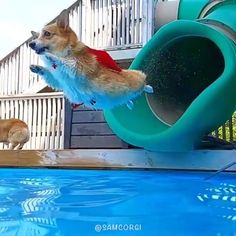 "36.2k Likes, 570 Comments - Dogs Of Instagram (@lnsta_dogs) on Instagram: ""From @samcorgi : ""When you don't want summer to end! ☀️"" *Sound on* #corgi"""