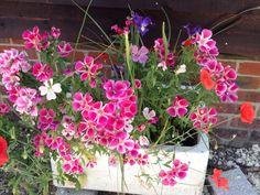 Butler sink flowers